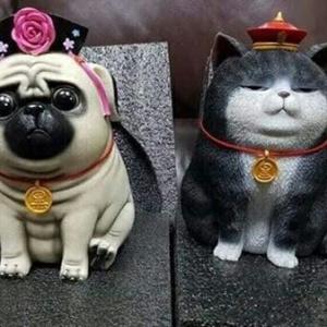 chó mèo bỏ ống 5d